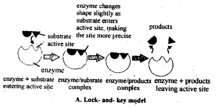 NCERT Solutions For Class 12 Chemistry Chapter 5 Surface Chemistry-5