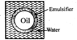NCERT Solutions For Class 12 Chemistry Chapter 5 Surface Chemistry-7