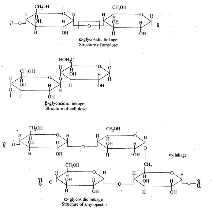 NCERT Solutions For Class 12 Chemistry Chapter 14 Biomolecules-6