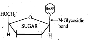 NCERT Solutions For Class 12 Chemistry Chapter 14 Biomolecules-12