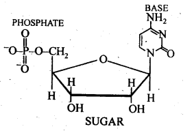 NCERT Solutions For Class 12 Chemistry Chapter 14 Biomolecules-13