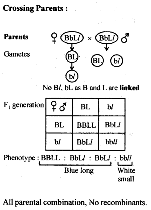 ncert-solutions-for-class-12-biology-principles-of-inheritance-and-variation-7