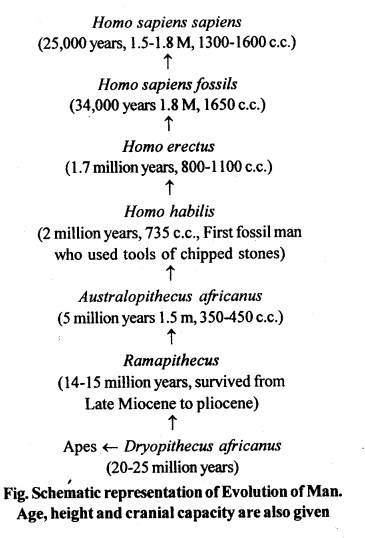 ncert-solutions-for-class-12-biology-evolution-8