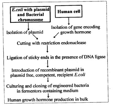 ncert-solutions-for-class-12-biology-biotechnology-and-its-applications-2